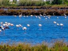 flamingos_esapal