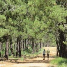 Bosque reserva Monte Gordo